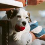 Cómo estimular la mente de tu mascota