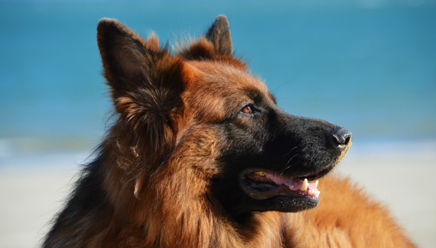 La visión de los perros