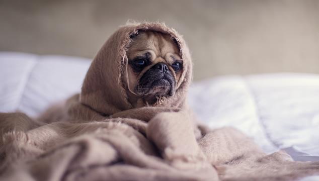 Cómo proteger a tu perro de la lluvia