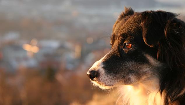 Perros de búsqueda y rescate