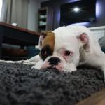 Cómo prevenir el olor a perro en tu casa