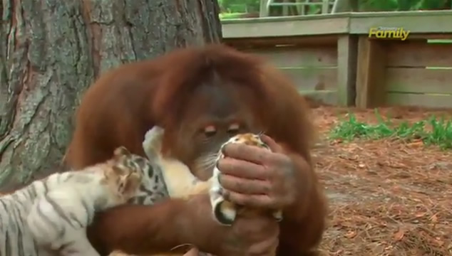 Inolvidables momentos con nuestras mascotas y animales
