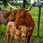 El instinto maternal en las mascotas
