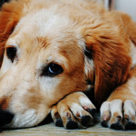 ¿Por qué mi perro se lame las patas?