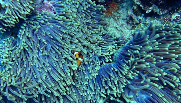 Lo que no sabías de los arrecifes coralinos