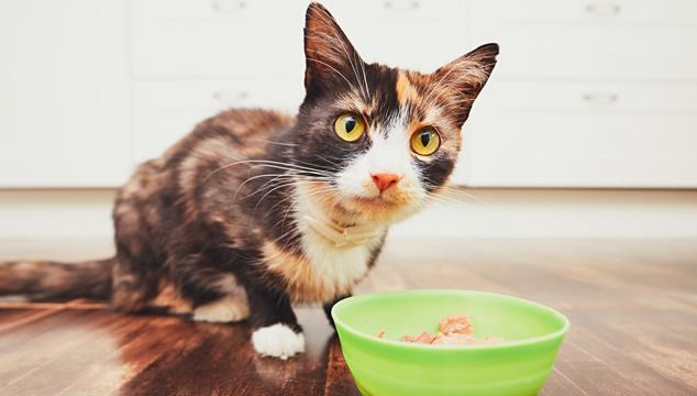 Comida prohibida para gatos