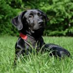 El etólogo, un especialista en modificar el comportamiento de nuestras mascotas