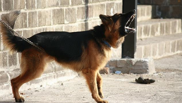 Comportamiento agresivo en perros