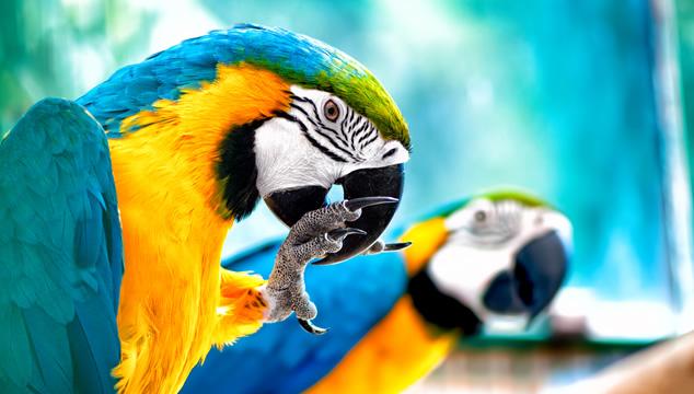 Las tres mejores aves para tener como mascota