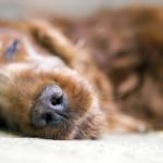 Signos de que tu perro tiene estrés