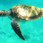 Datos interesantes sobre las tortugas