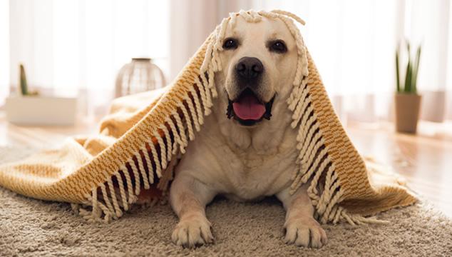 Como cuidar a tu mascota durante la temporada de invierno