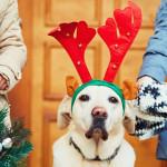 Las celebraciones y nuestras mascotas