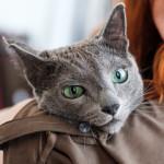 Bronconeumonía en gatos