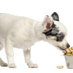 ¿Por qué es importante una buena alimentación en nuestra mascota?