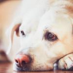 Estornudo en perros