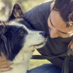 El amor de los animales