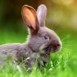 ¿Qué come un conejo?