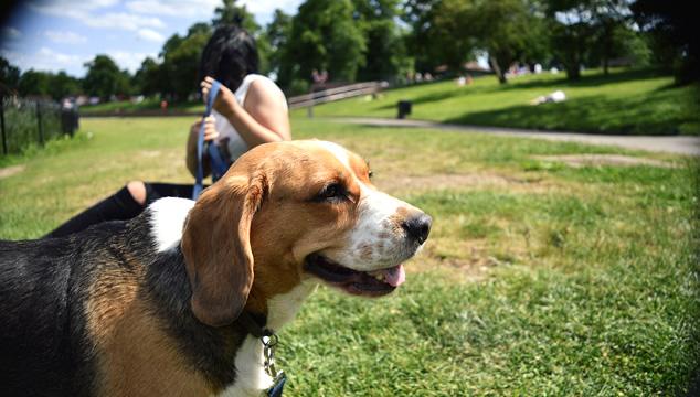 Parques especiales para perros