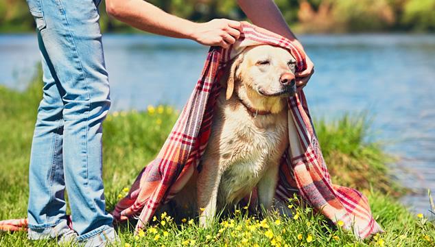 Los mejores consejos para tu mascota en este verano