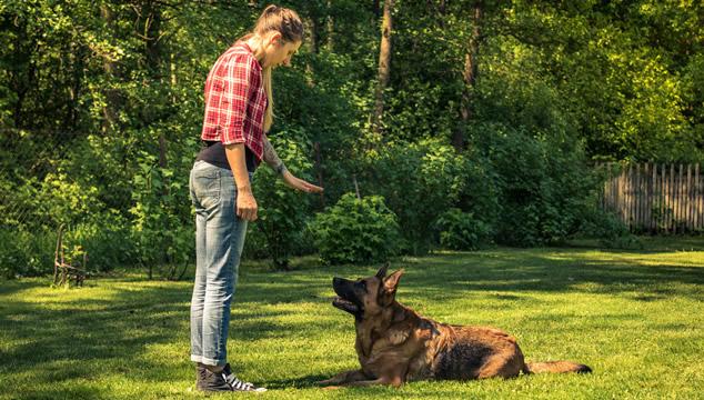 perro-entrenando