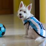 Fotos de mascotas durante la Copa Mundial de la FIFA™ 2018