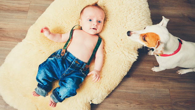 Los perros y la llegada del bebé