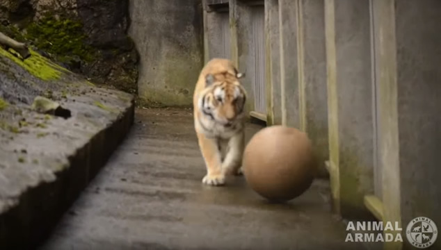 Videos de mascotas y otros animales jugando fútbol