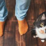 Lo que debemos saber antes de adquirir un gato