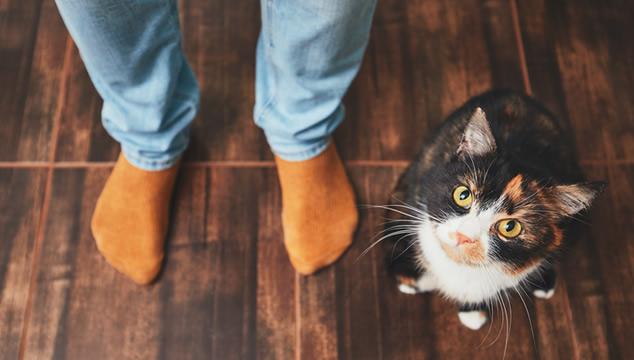 Gato con hombre