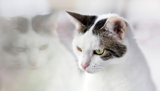 Lo que debes saber sobre el arenero para tu gato