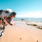 Lo que debes tener en cuenta para las vacaciones si tienes una mascota