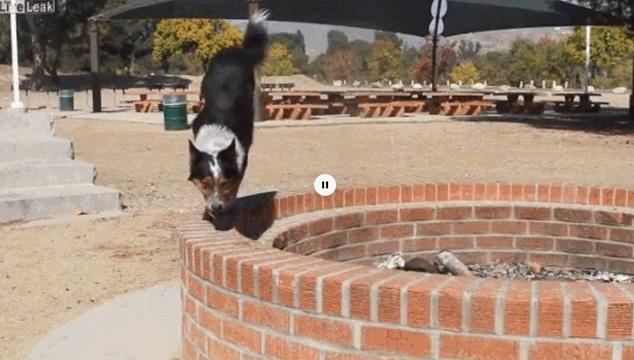 Divertidos videos de mascotas