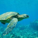 8 curiosidades sobre las tortugas