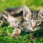 ¿Puedo sacar a mi gato a caminar a la calle?