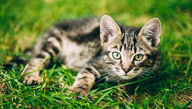 Gato en parque