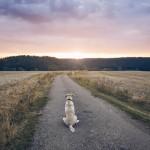 Ideas para un funeral de mascotas