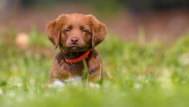 perro-en-jardin
