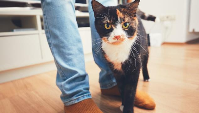 Gato con humano