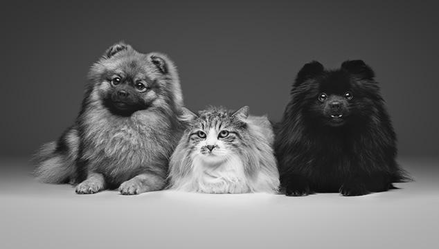 Diferencias entre perros y gatos