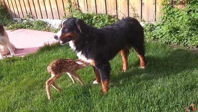 Venado con perro