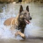 Consejos para llevar tu perro a nadar de forma segura