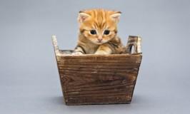 ¿Cómo saber cuál es el mejor arenero para mi gato?