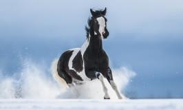 Lo que no sabías de los caballos