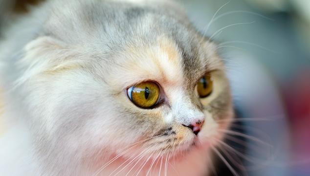 Datos interesantes sobre los ojos de los gatos