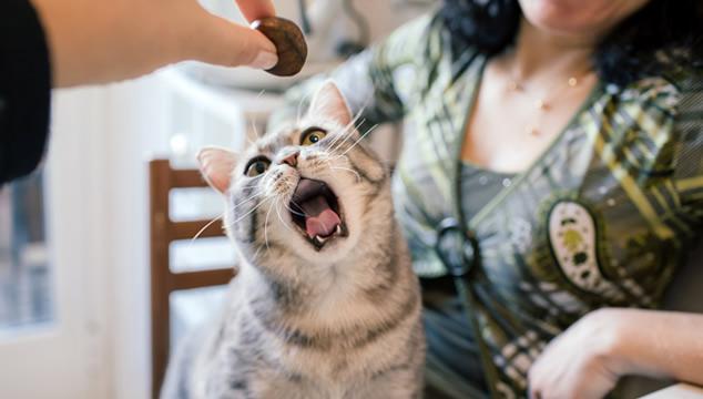 ¿Se le pueden enseñar trucos a un gato?