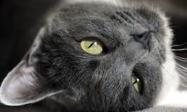 El arenero del gato