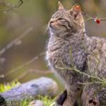 Parásitos en gatos