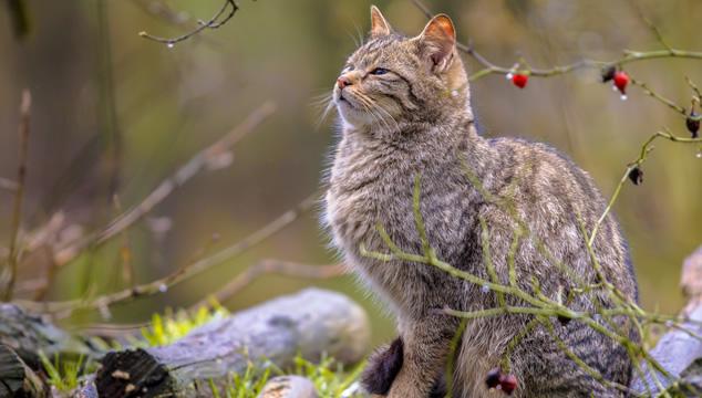 gato-afuera
