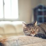 ¿Por qué duerme tanto mi gato?